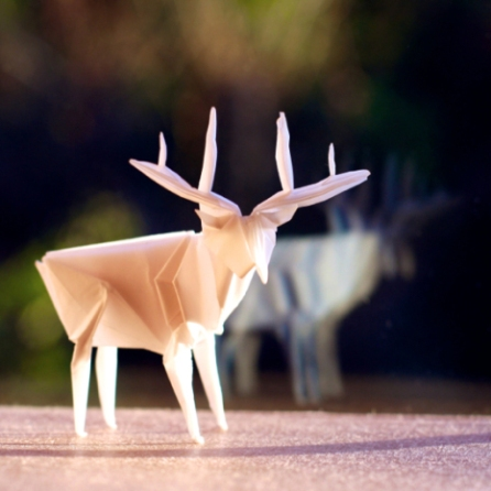 img_5756-stag