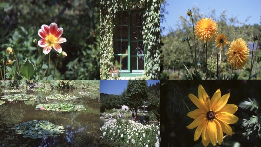 I Giardini di Monet ago 1999